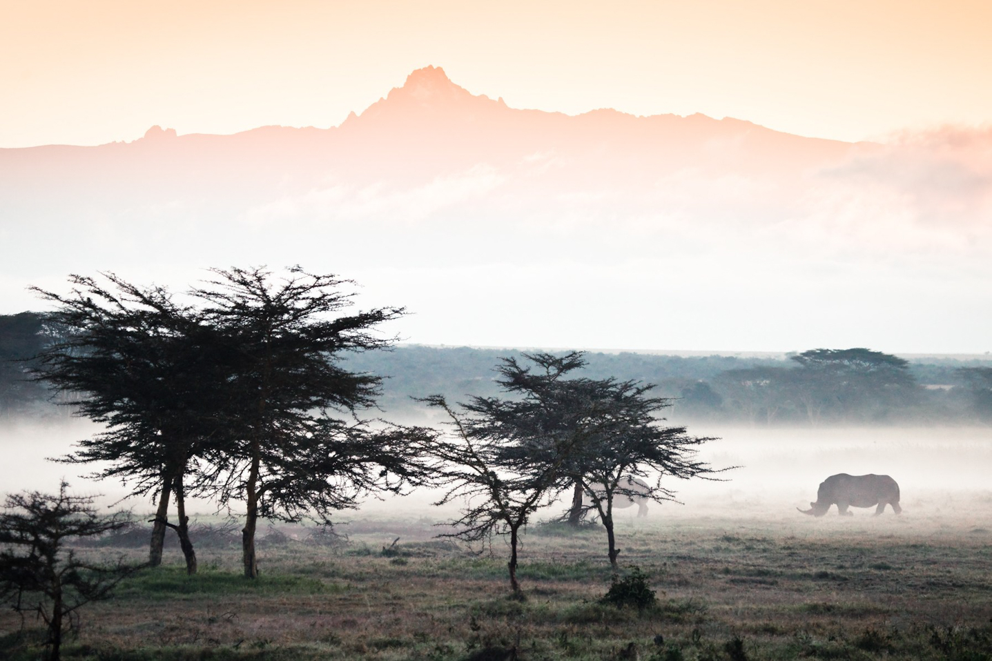 Collegare agenzie in Kenya